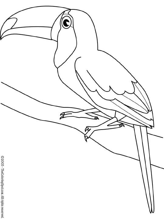 kleurplaten dieren vogels
