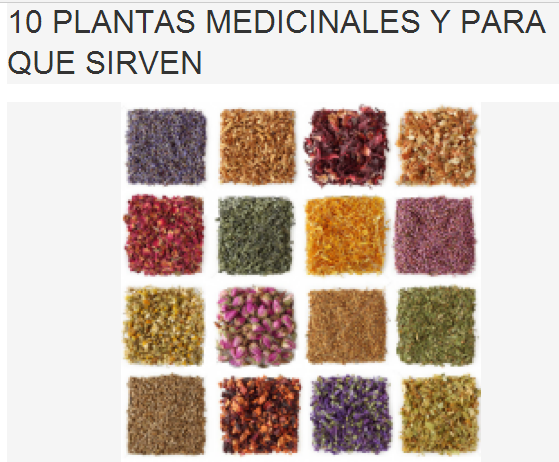 10 plantas medicinales y para que sirven salud