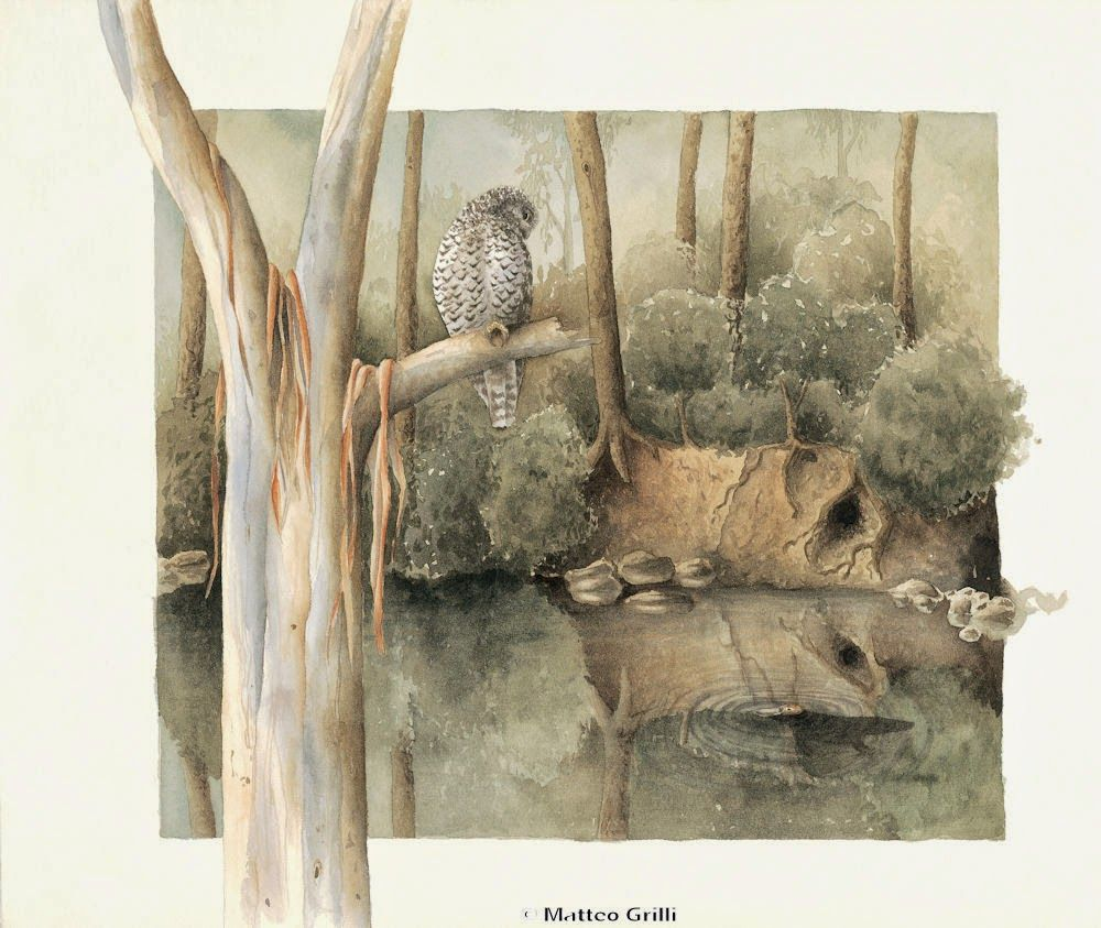 Matteo Grilli Wildlife Art: Book Launch and New Greeting Cards
