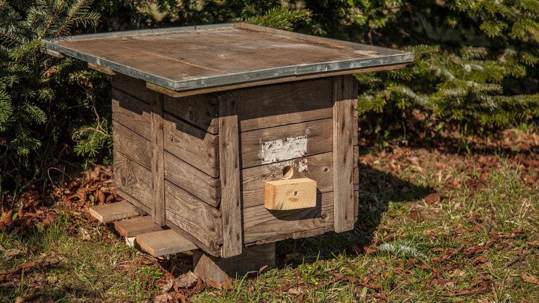 Anleitung: Einen Hummelkasten selbst bauen