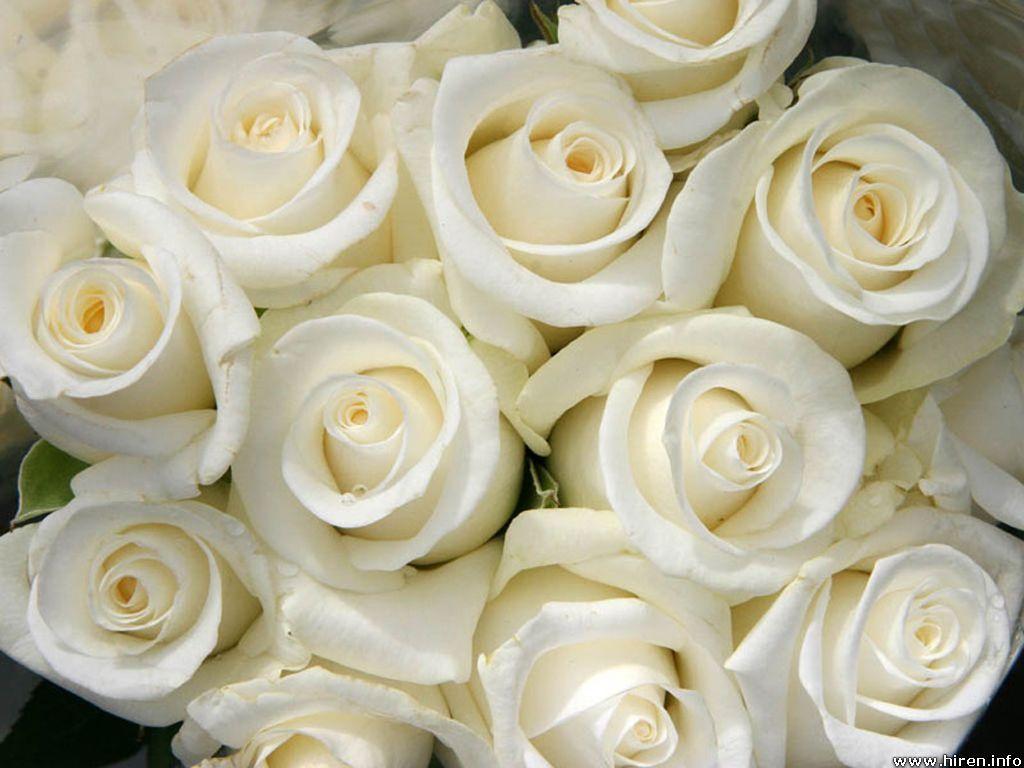 White rose flower bouquet wallpaper hd wallpaper june for Cream rose wallpaper