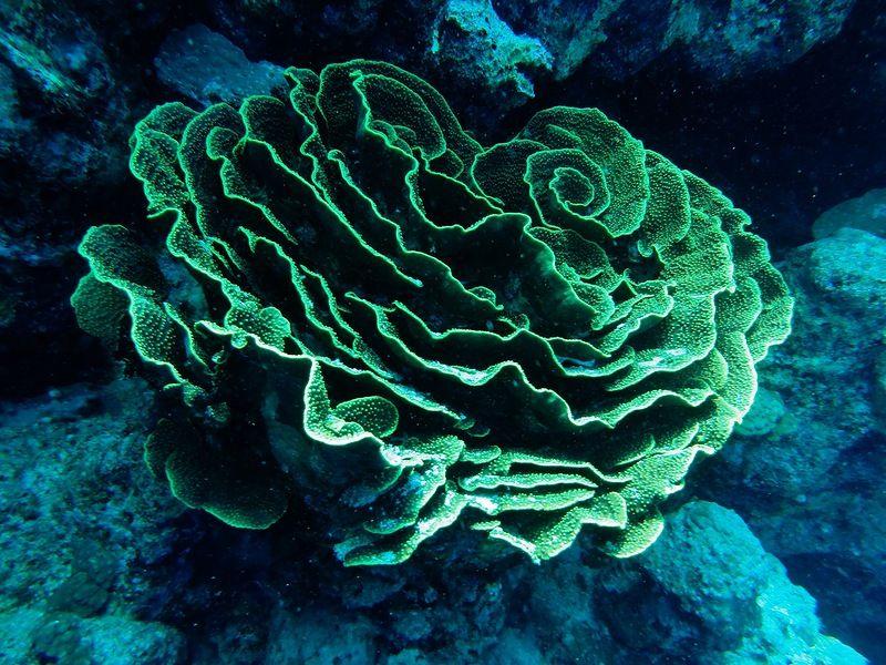 руководство морские растения с картинками этом после возвращения