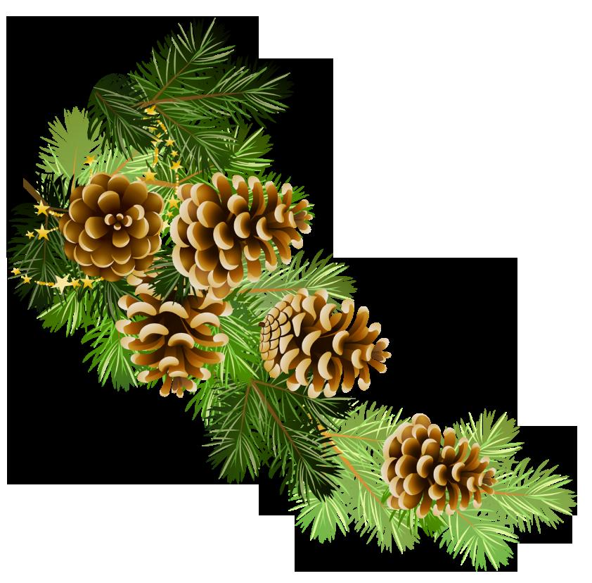 christmas pine cone drawing - photo #28