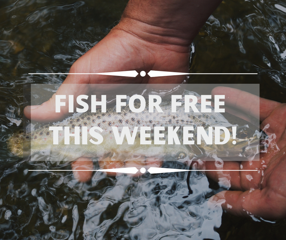 Tired of being stuck indoors? Did you know, you can fish for free in Washington State this weekend, June 6-7, 2020? You don't even need a fishing license or a vehicle access pass to join in the fun. #gofish #letsgofishing #washingtonstate #pnw #upperleftusa #outdoors #outdoorrecreation