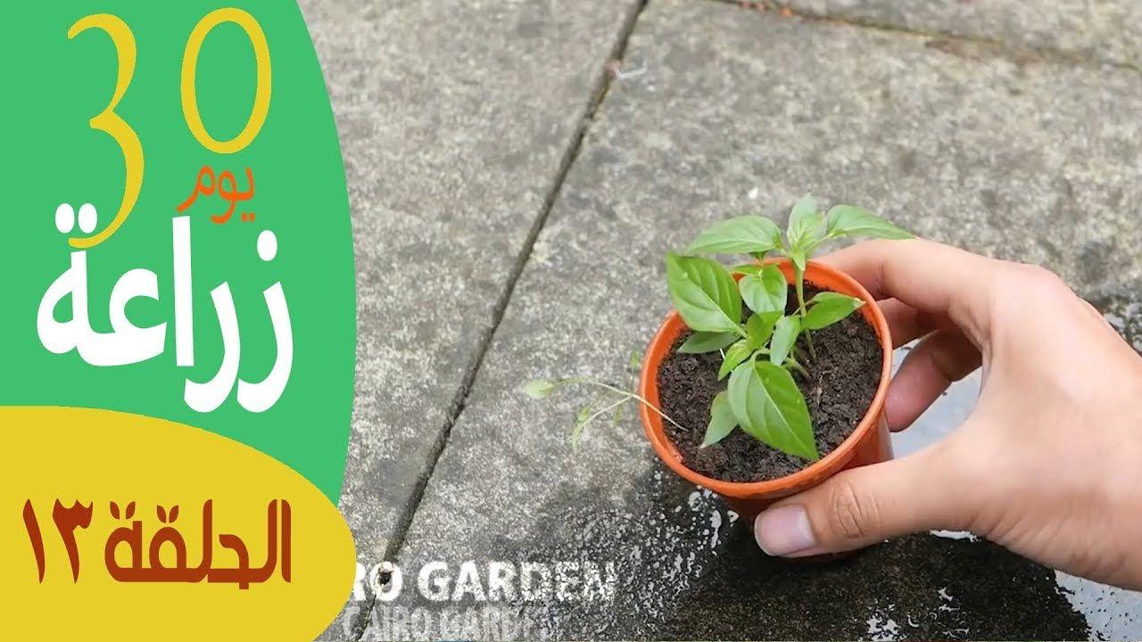 إزرع بيتك ٣٠ يوم زراعة للمبتدئين الحلقة ١٣ عايز زراعة البذور تنجح Herbs Plants