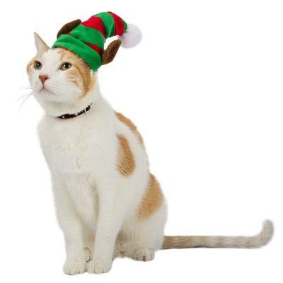 Whisker CityA Elf Cat Hat