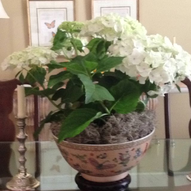 White Hydrangea In Oriental Bowl And Stand As Dining Room Centerpiece Dining Room Centerpiece