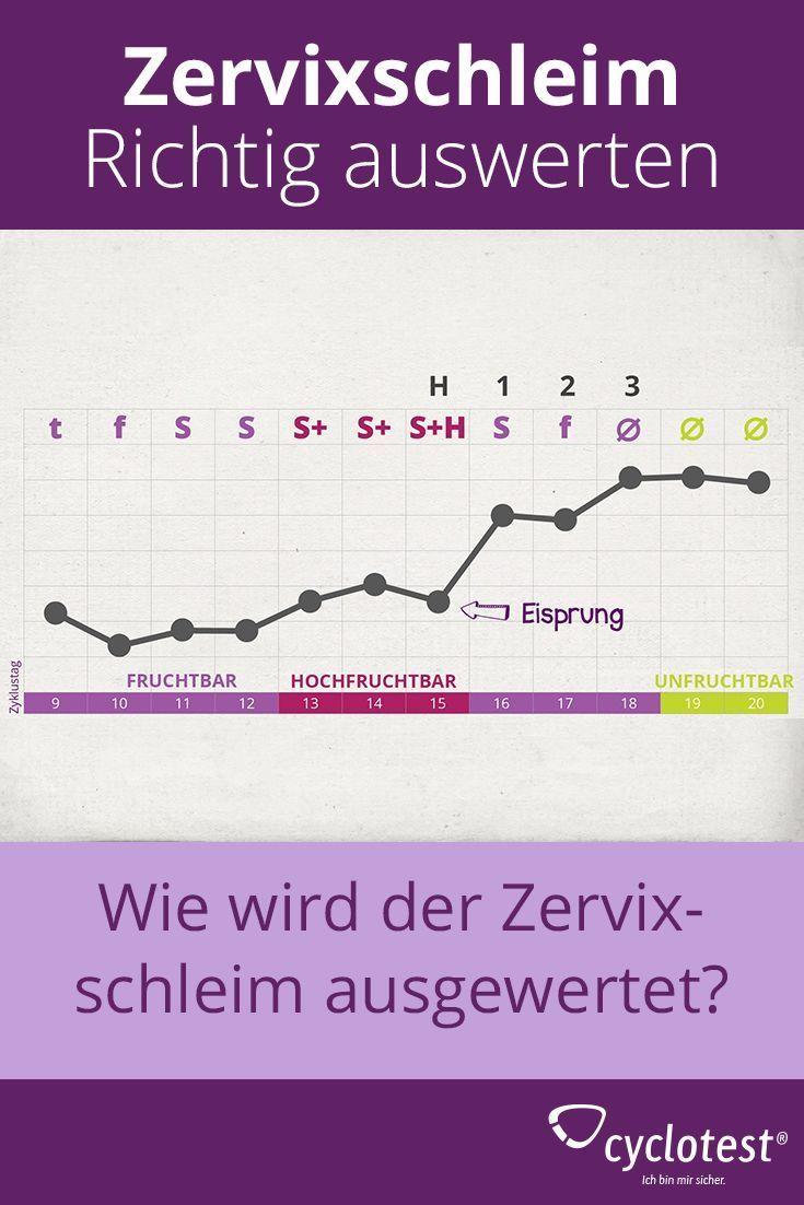 Zervixschleim richtig beobachten und auswerten | cyclotest