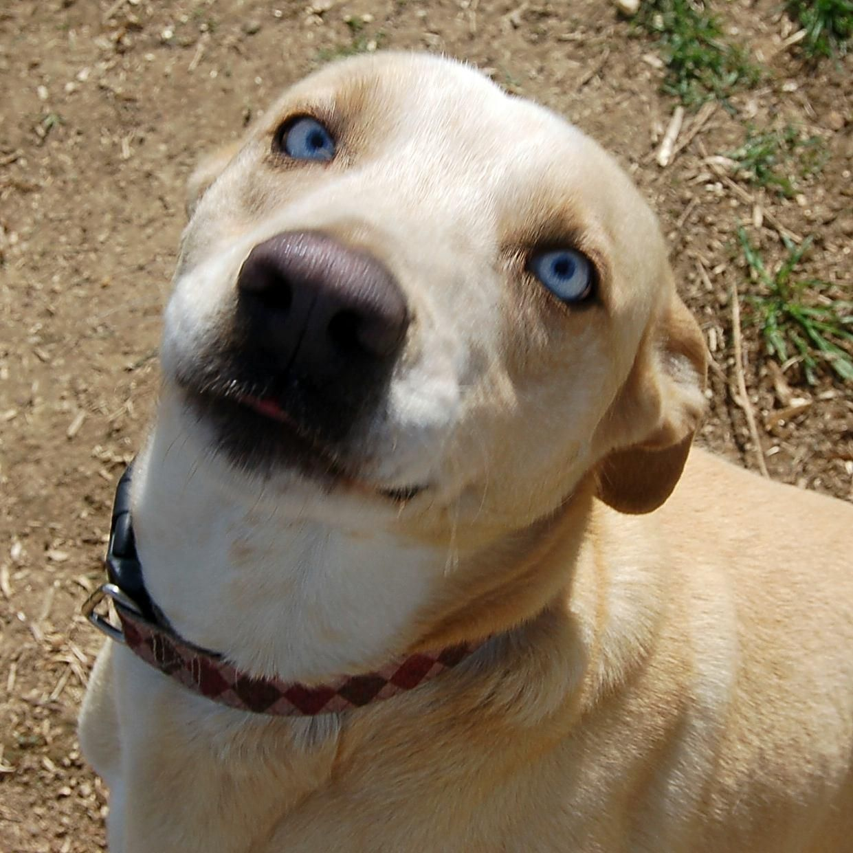 Adopt Blue on (With images) Help homeless pets, Homeless