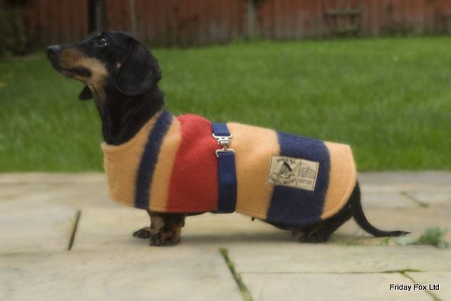 Dachshunds Witney Wool Miniature Dachshund Coat Friday Fox