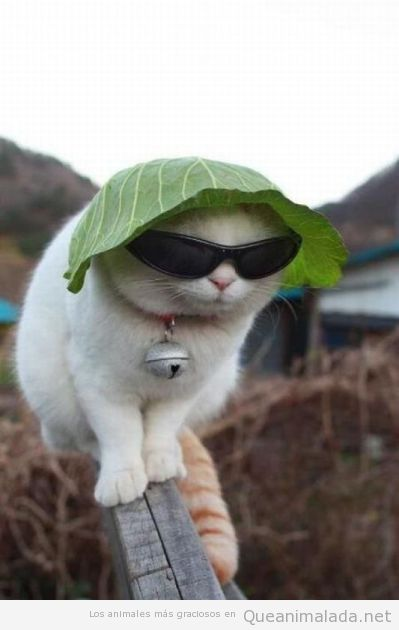 Photo of Tienes que protegerte del sol.   – memes random – #del #memes #protegerte #RANDO…