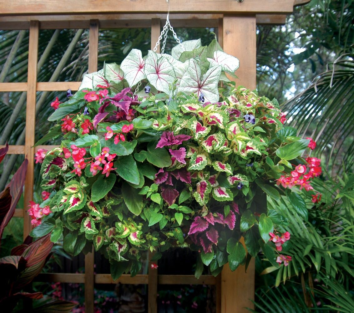 Dragon wing begonias and coleus are planted through the side holes ...