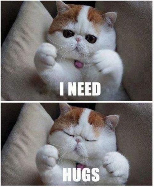 j'ai besoin d'un calin i ned hugs