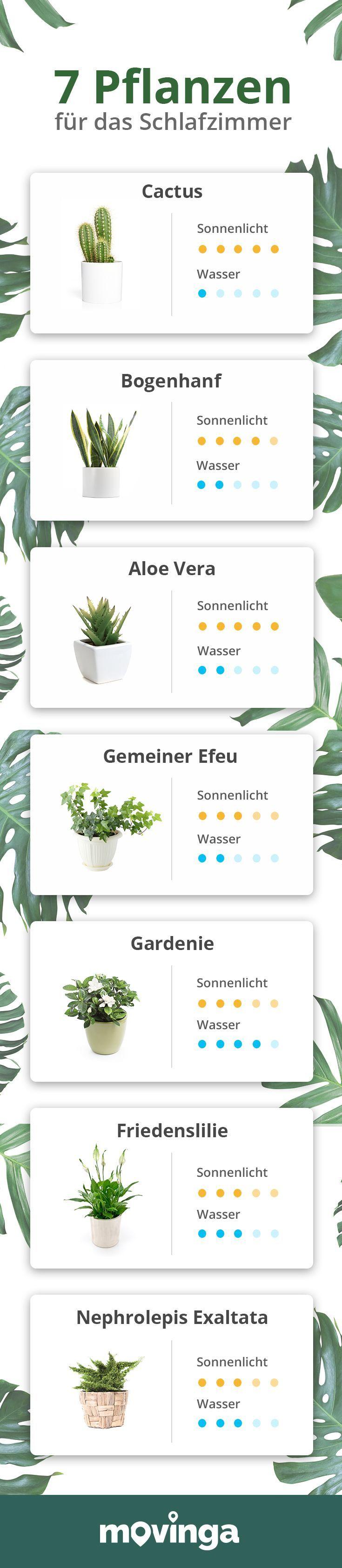 Pflanzen im Schlafzimmer 2019 Diese 7 Pflanzen sorgen für ...