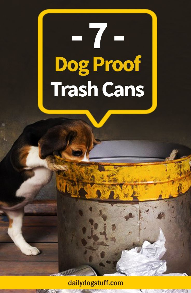 Tips for Keeping Fido Out of the Garbage