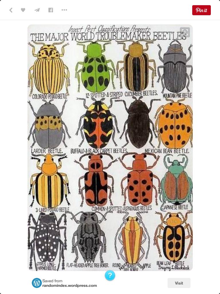 Pin By Linda A On Batik Insect Art Bug Art Art