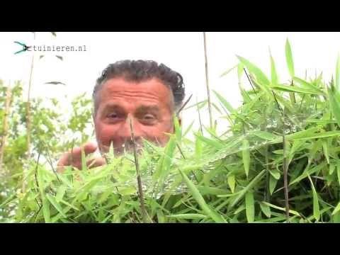 Bamboe snoeien: wanneer en hoe? | vtwonen