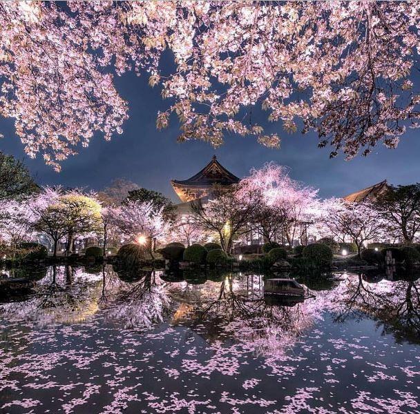 Мое путешествие: фото работ | Натуральный, Цветение вишни ...  Фруктовый Сад Обои
