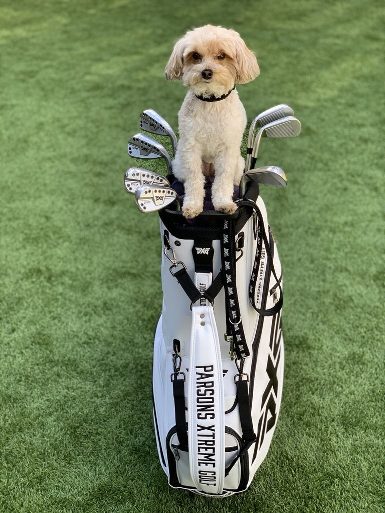 Sometimes we prefer four paws over foursomes. Happy