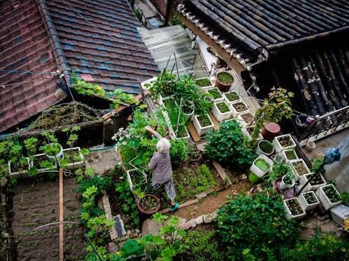 Garden Anywhere Gardensthatwin Rooftop Garden Urban Garden Roof Garden