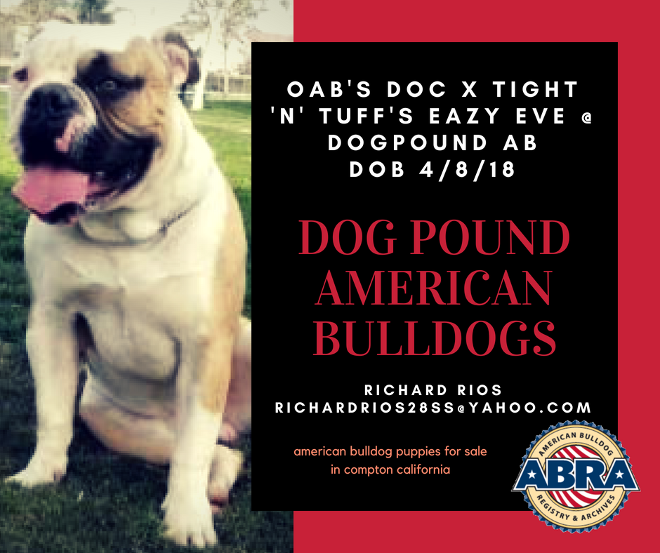 Abra Litter Of The Day Congratulations Richard Dogpound American