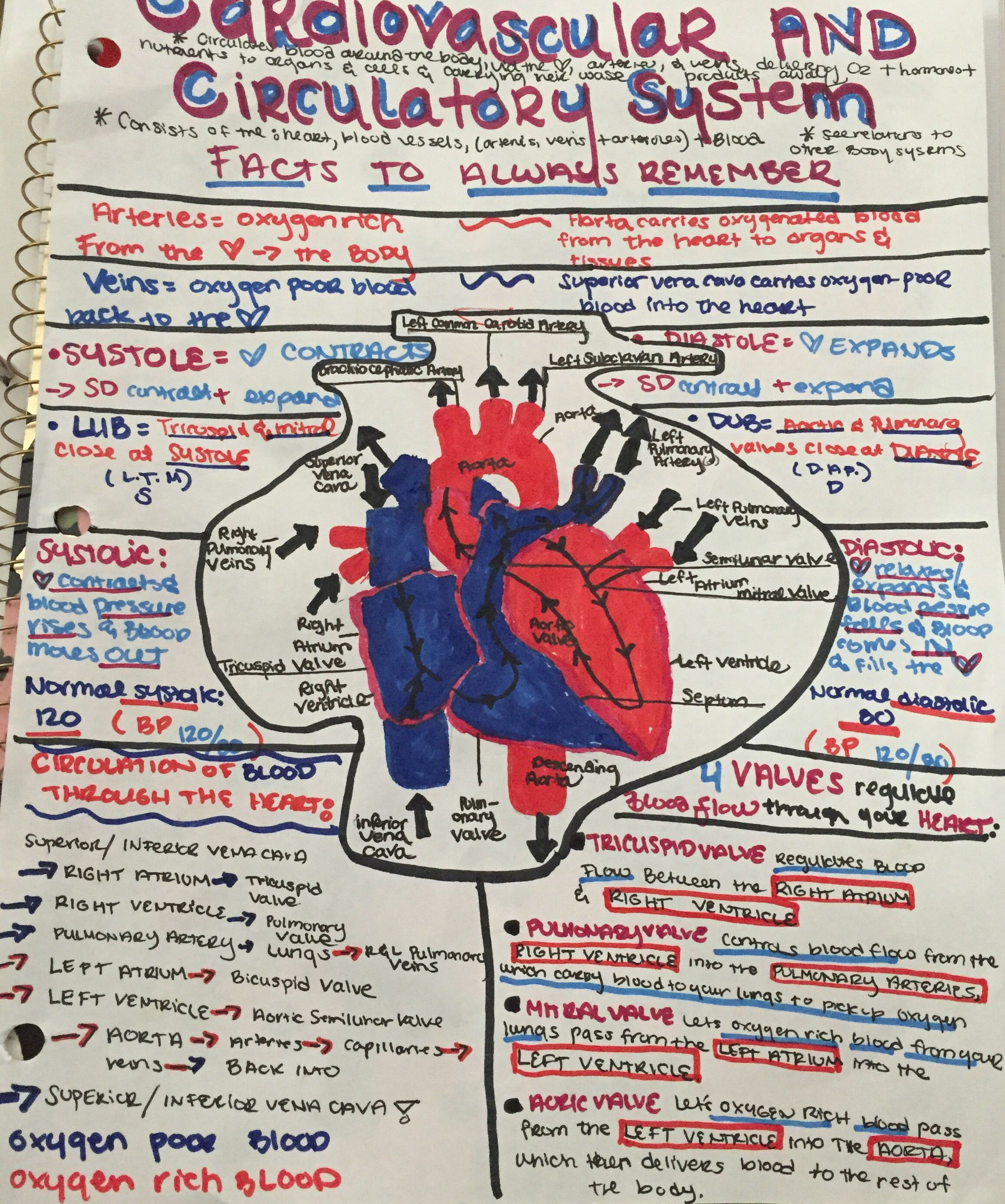 Structures Of The Circulatory System Manual Guide