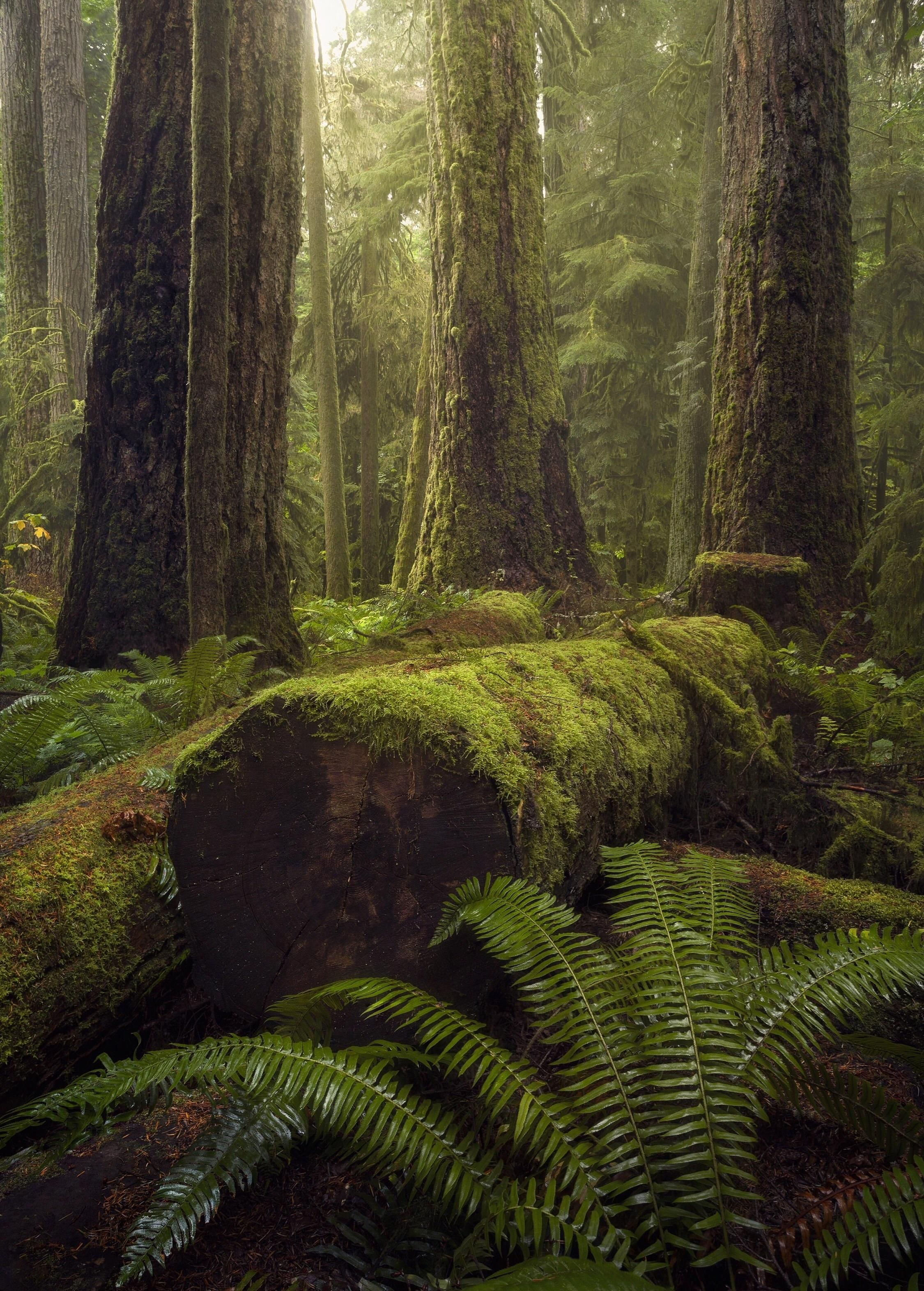 The Forest Comes To Life After A Good Rainfall Cathedral Grove Vancouver Island Bc Oc 2 Cathedral Grove Vancouver Island Forest Photography Vancouver Island