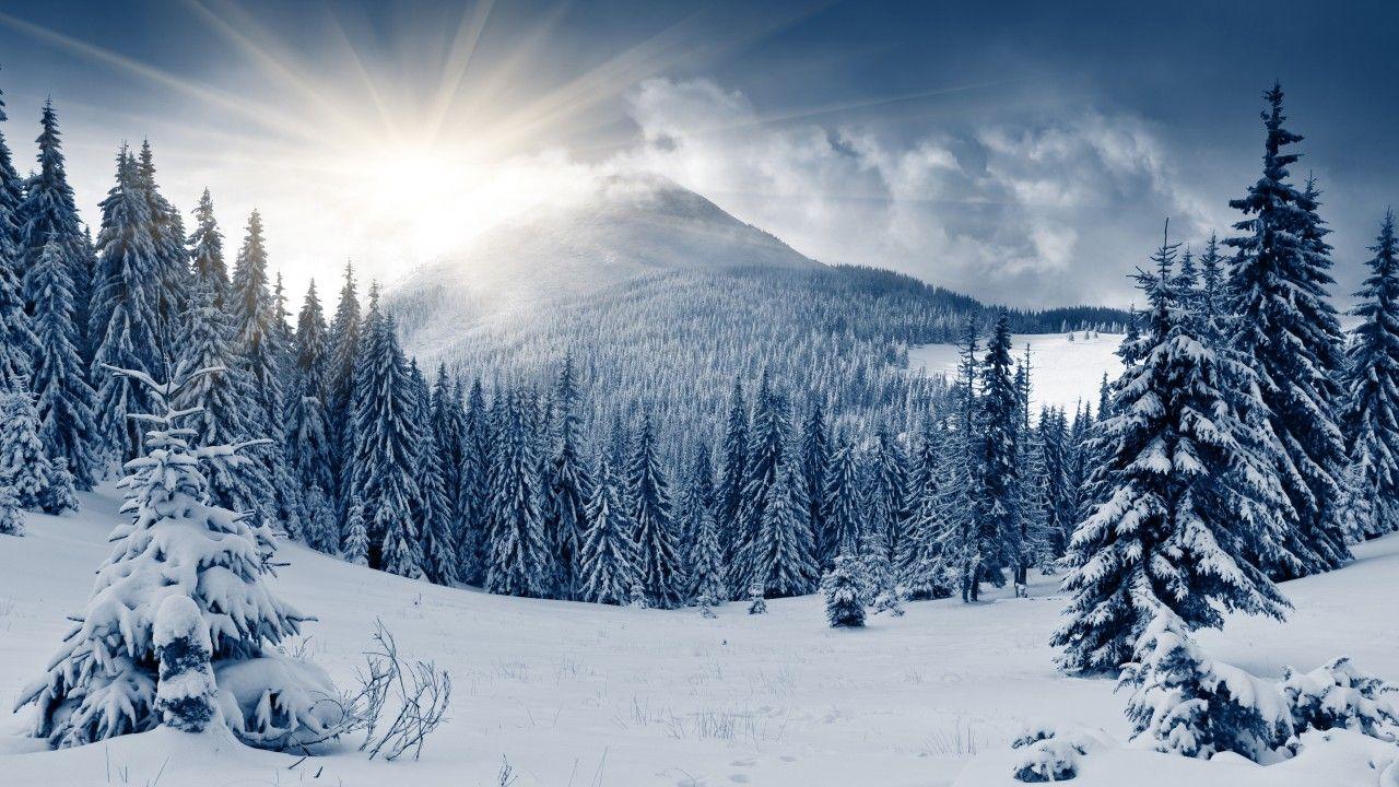 Zimnij Les Oboi Priroda Les Zimnij Les Gora Solnce Sneg Elki Winter Forest Mountain Sun Snow Fir T Winter Forest Winter Landscape Forest Wallpaper Hd wallpaper snow winter forest trees