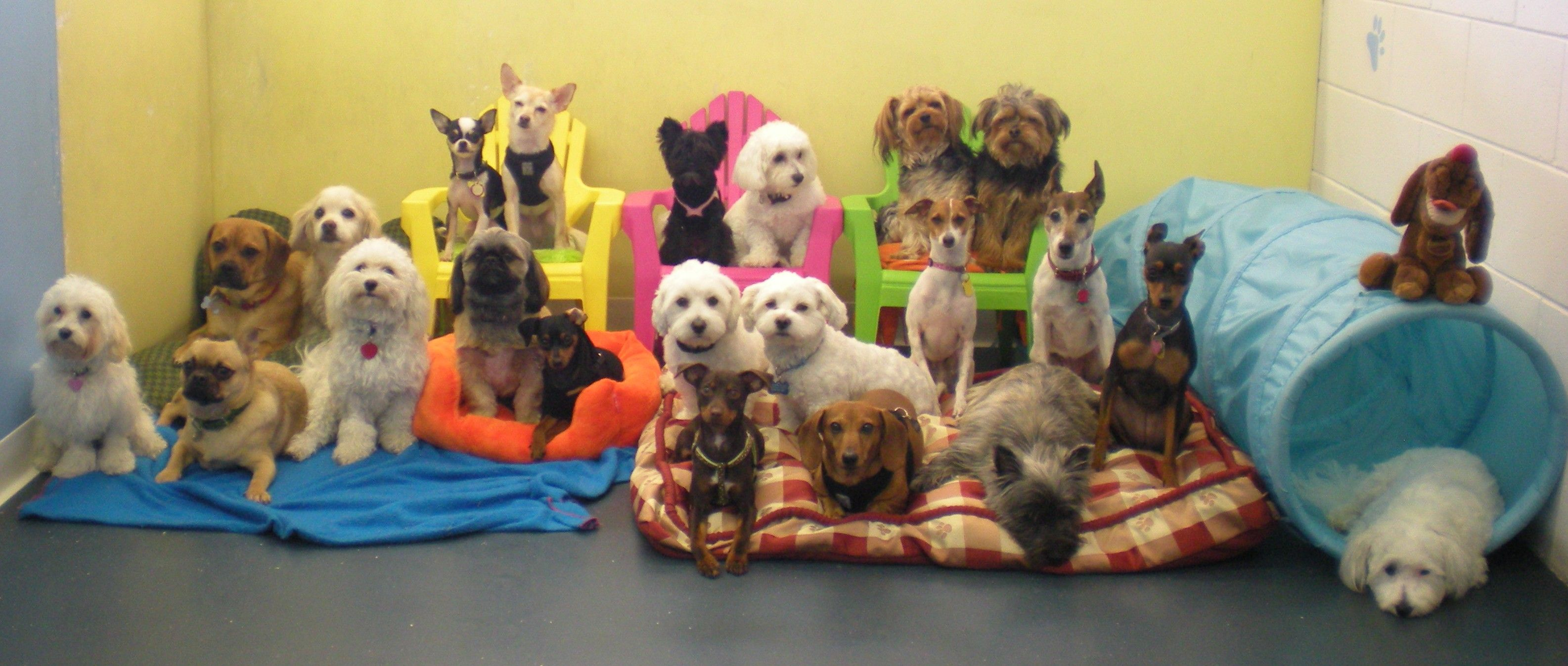 Small Paws Doggie Daycare Home Dog Daycare Your Dog Animal Shelter
