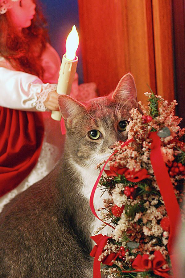 Pin by Fun Holiday Cats on Fun Holiday Cats Christmas Cats ...