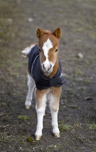 Oh my gosh. This little baby horse in its little horse blanket is so dang cute!