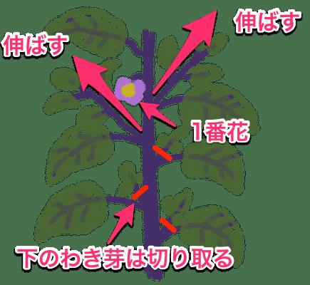 ナス 茄子 の栽培方法 育て方のコツ なす 栽培 栽培 ナス