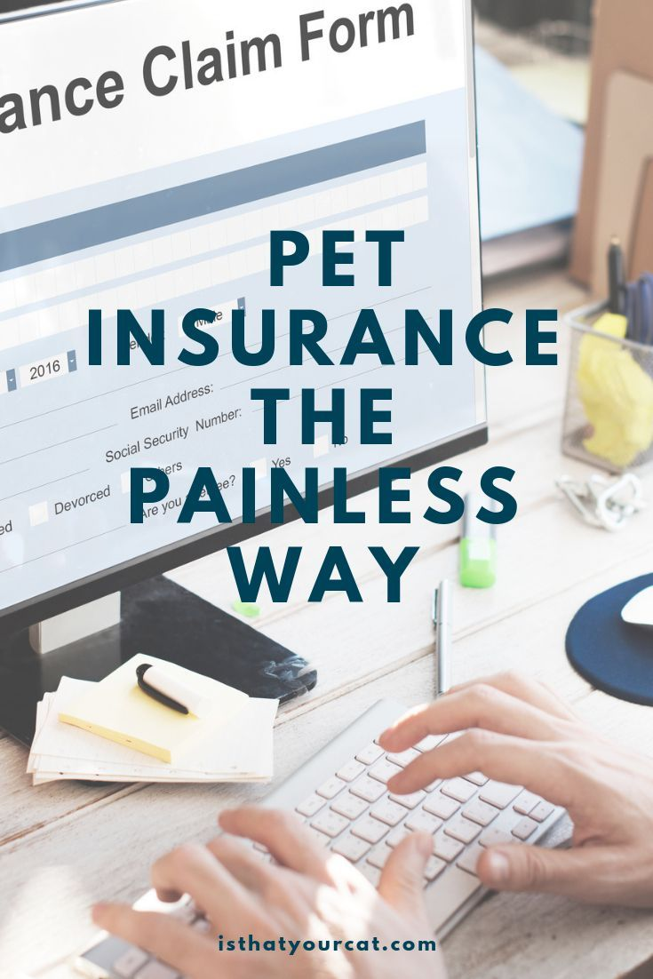 Easy to use low cost pet insurance cat insurance pet