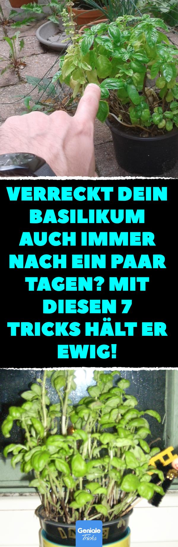 4 Tricks, mit denen dein Basilikum ewig lebt. #vertikalergemüsegarten