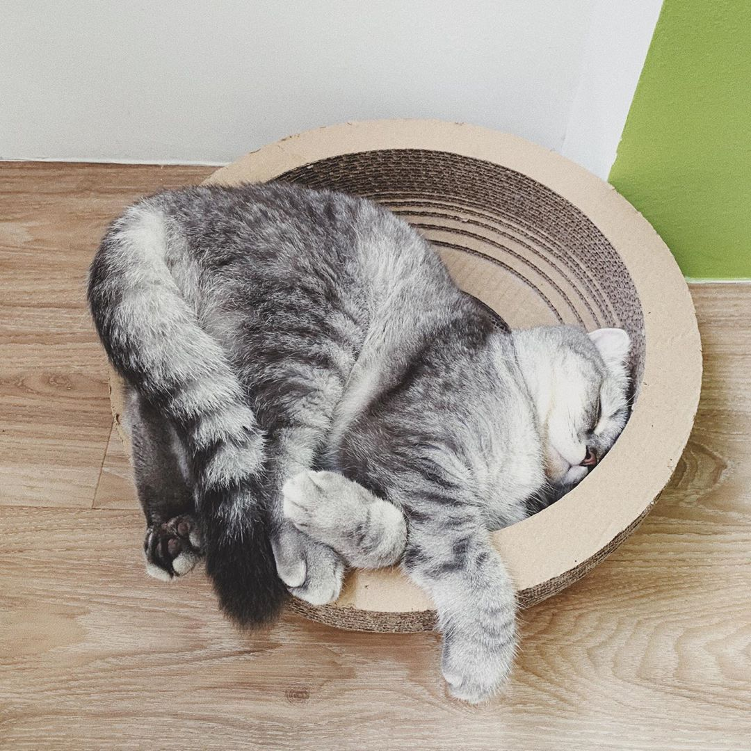 My new sleeping position cat recipes monty the cat