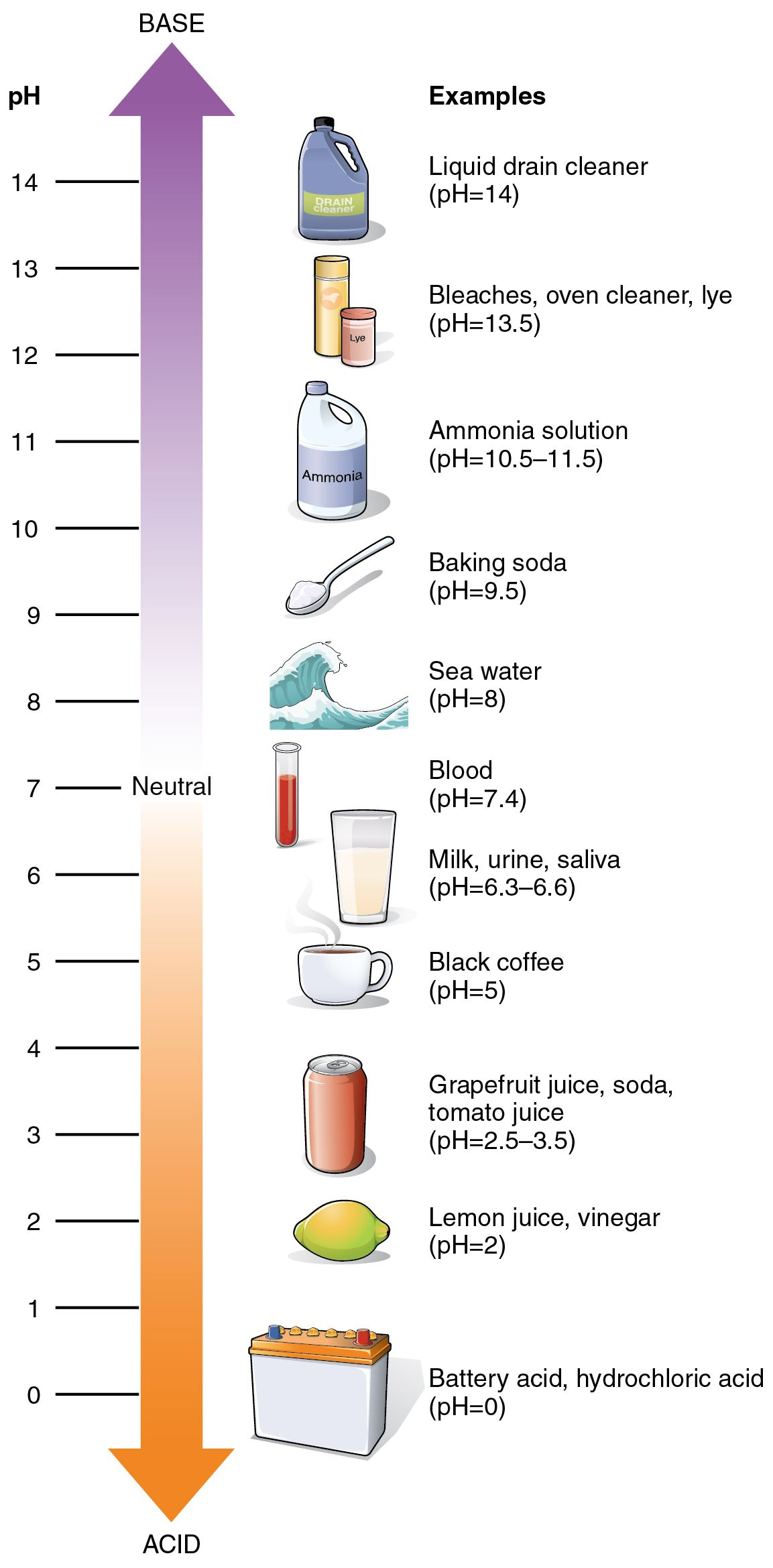 Acids & Bases ph scale science journal sheet. Here we draw what ...