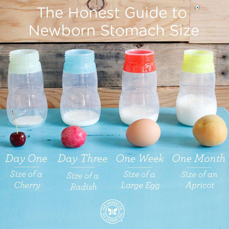 Breastfeeding chart for newborns newborn stomach size