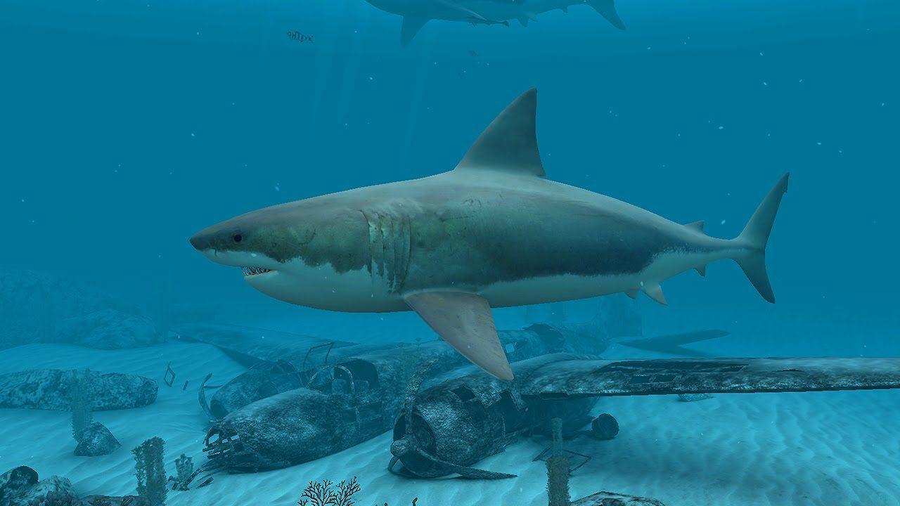 Sharks Great White 3d Screensaver Live Wallpaper Hd Underwater Wallpaper Live Wallpapers Shark