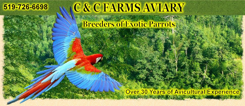 C & C Farms Aviary - Canadian Parrot Breeder | birds
