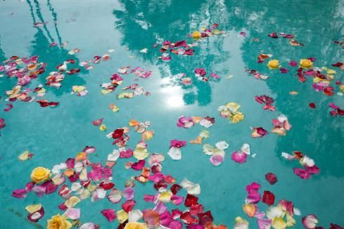 Rose Petals in a pool