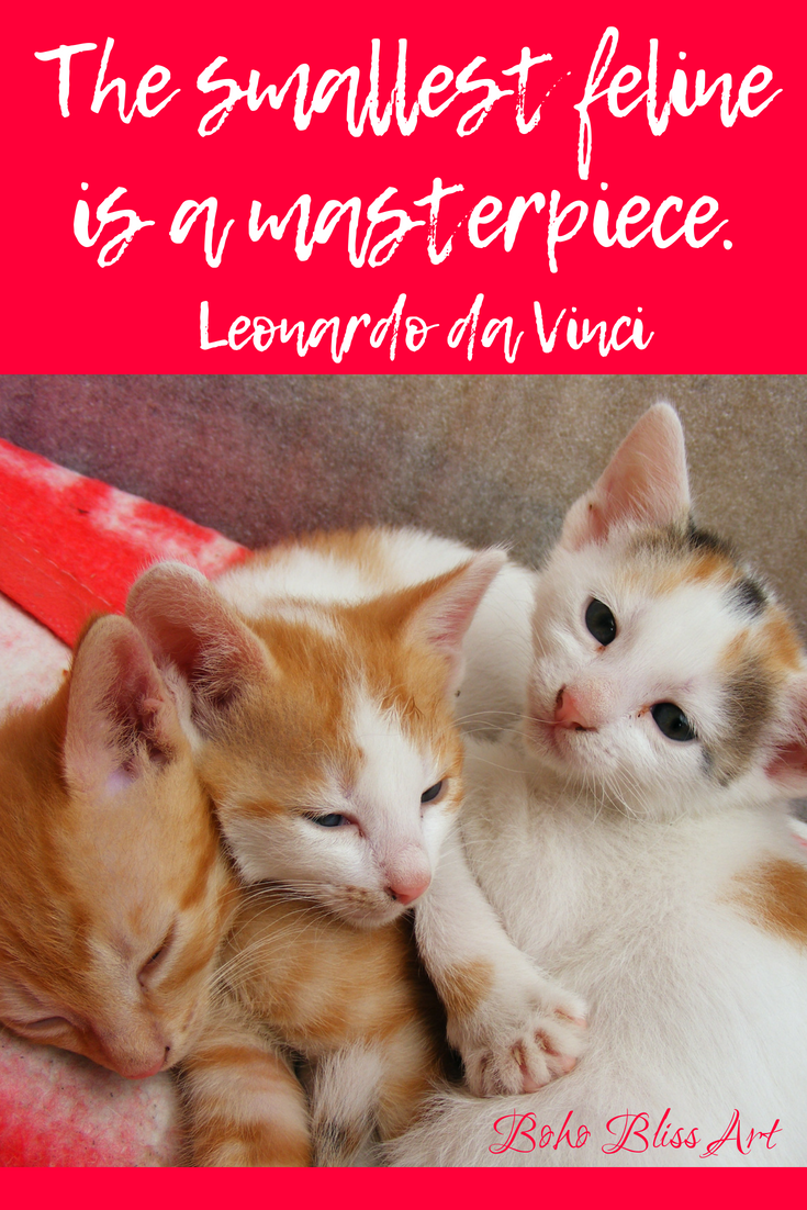 Cats A Collection of Quotes Cat quotes, Cats, Cat lovers