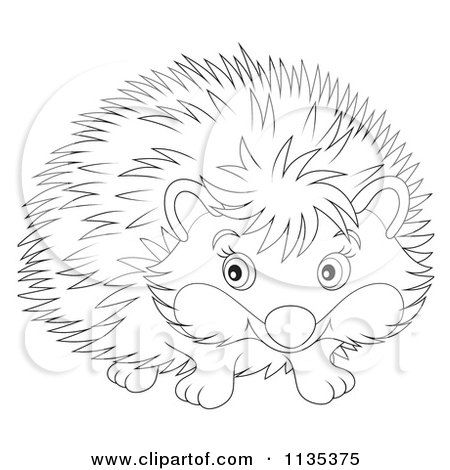 Cute Porcupine Coloring Page Cute Outlined Hedgehog Cartoon Clip
