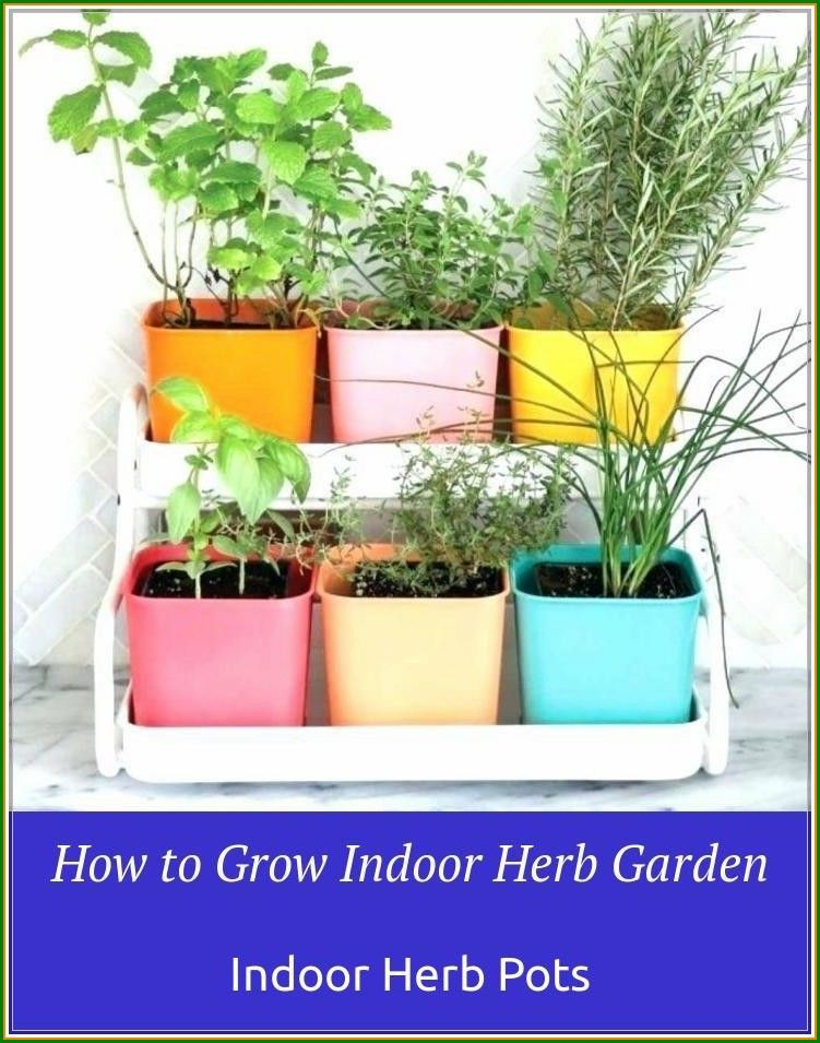 No Need To Buy Herbs Grow Indoor Herb Pots At Your Home Now With