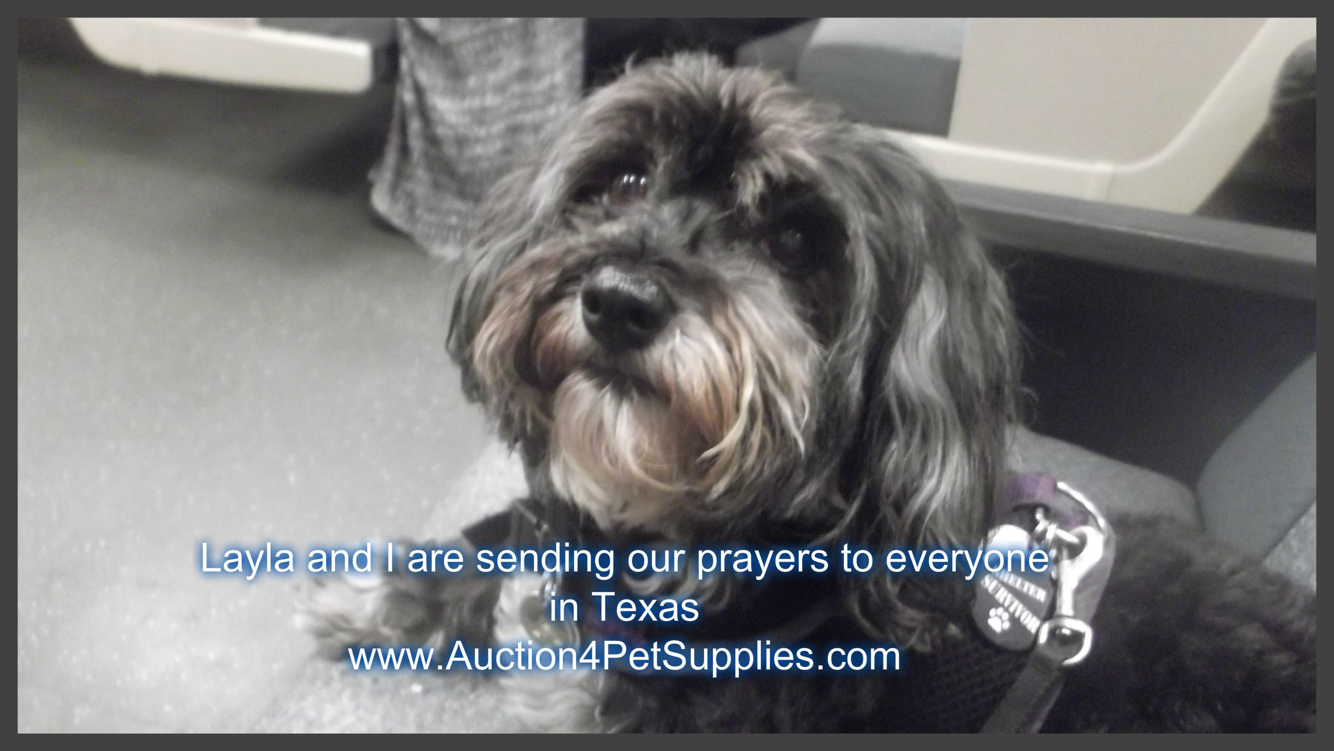 An Auction To Help Austin Pets Alive Is Being Held On Our Auction Site At The Moment And We Are Asking Everyone To List Items Or Bi Dogs Dog Friends Pet