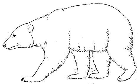 black bear coloring page # 2