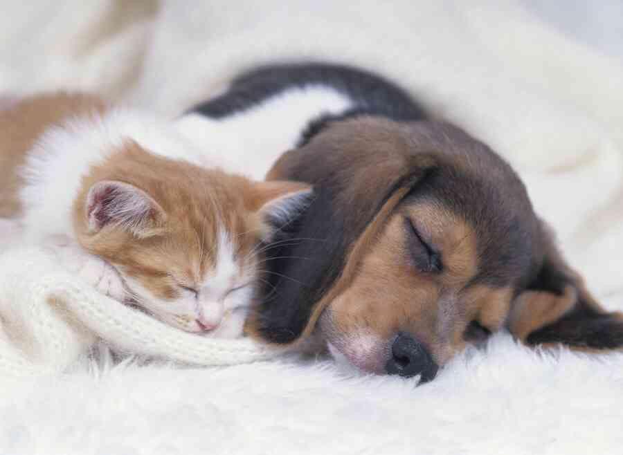 「きゅん♡」おしゃれまとめの人気アイデア Pinterest  リカ ビーグル 子犬、可愛いワンちゃん、キュートな猫