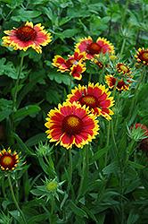 fd137d80084ca29cf54c26dffcd4079b - Gardener's Supply Williston Garden Center