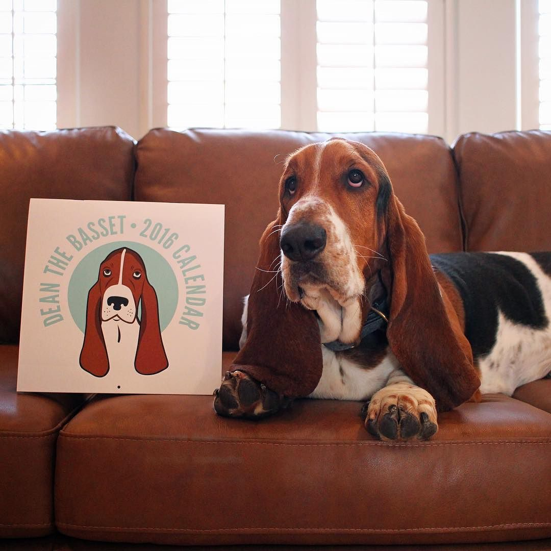 Make Your 2016 Extra Floppy With The Dean The Basset Calendar A