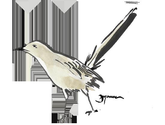 Mockingbird Watercolor Bird Watercolour Inspiration Watercolor Art