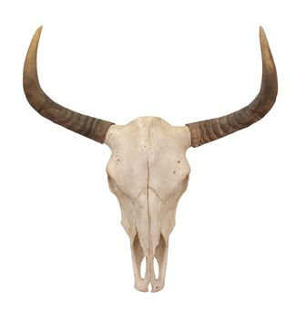 Bull Skull Wall Decor